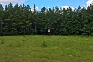 Walker Springs Hunting Camp and Timber Investment in Clarke, AL (2 of 33)