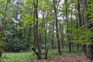 Walker Springs Hunting Camp and Timber Investment in Clarke, AL (33 of 33)