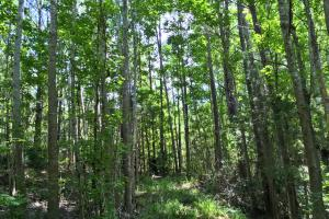Walker Springs Hunting Camp and Timber Investment in Clarke, AL (26 of 33)