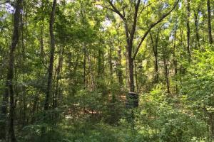 Walker Springs Hunting Camp and Timber Investment in Clarke, AL (31 of 33)