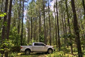 Walker Springs Hunting Camp and Timber Investment in Clarke, AL (12 of 33)
