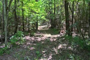 Walker Springs Hunting Camp and Timber Investment in Clarke, AL (29 of 33)