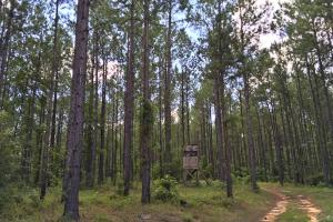 Walker Springs Hunting Camp and Timber Investment in Clarke, AL (18 of 33)