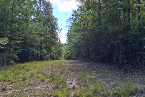 Walker Springs Hunting Camp and Timber Investment in Clarke, AL (32 of 33)