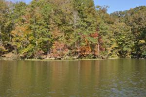 Lake Mitchell Waterfront Acreage in Coosa, AL (18 of 51)