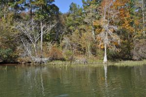 Lake Mitchell Waterfront Acreage in Coosa, AL (28 of 51)