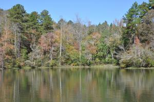 Lake Mitchell Waterfront Acreage in Coosa, AL (30 of 51)