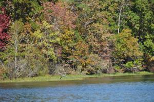 Lake Mitchell Waterfront Acreage in Coosa, AL (46 of 51)