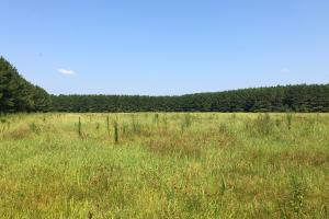 Timber and Crop Investment - Calhoun County MS