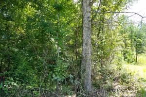 Pea River Hunting/Timber Tract in Barbour, AL (7 of 25)