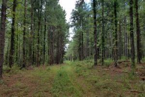 Pea River Hunting/Timber Tract in Barbour County Alabama