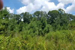 Pea River Hunting/Timber Tract in Barbour, AL (10 of 25)