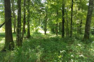 Pea River Hunting/Timber Tract - Barbour County AL