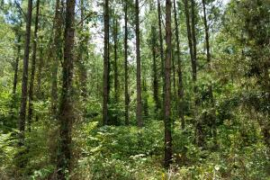 Pea River Hunting/Timber Tract in Barbour, AL (21 of 25)