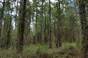 Pea River Hunting/Timber Tract in Barbour, AL (22 of 25)