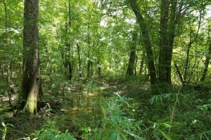 Pea River Hunting/Timber Tract in Barbour, AL (15 of 25)