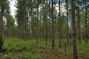 Pea River Hunting/Timber Tract in Barbour, AL (17 of 25)