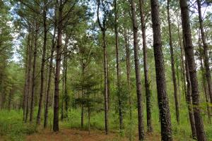 Pea River Hunting/Timber Tract in Barbour, AL (13 of 25)