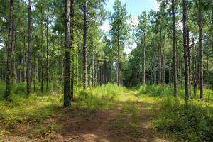 Pea River Hunting/Timber Tract in Barbour, AL (14 of 25)