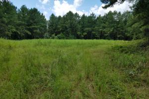 Pea River Hunting/Timber Tract in Barbour, AL (9 of 25)