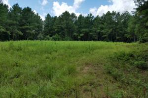 Pea River Hunting/Timber Tract in Barbour, AL (23 of 25)
