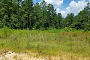 Pea River Hunting/Timber Tract in Barbour, AL (12 of 25)