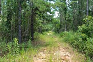Pea River Hunting/Timber Tract in Barbour, AL (19 of 25)