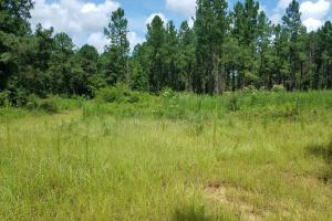 Pea River Hunting/Timber Tract in Barbour, AL (16 of 25)