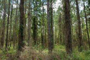 Pea River Hunting/Timber Tract in Barbour, AL (5 of 25)