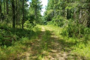 Pea River Hunting/Timber Tract in Barbour, AL (24 of 25)