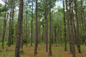 Pea River Hunting/Timber Tract in Barbour, AL (3 of 25)