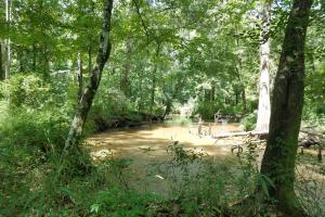 Pea River Hunting/Timber Tract in Barbour, AL (11 of 25)