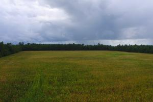 Cherry Grove Farm, Timber, and Recreational Tract - Columbus County NC
