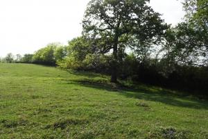 Lakes, Large Oaks, Fenced with Improved Pasture in Madison, TX (3 of 14)