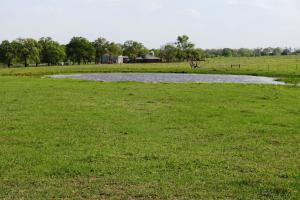 Lakes, Large Oaks, Fenced with Improved Pasture in Madison, TX (11 of 14)