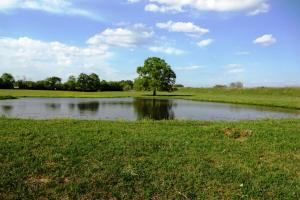 Lakes, Large Oaks, Fenced with Improved Pasture - Madison County TX