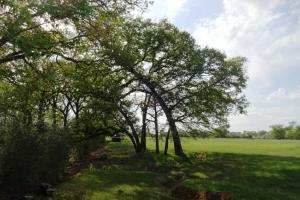 Lakes, Large Oaks, Fenced with Improved Pasture in Madison, TX (6 of 14)