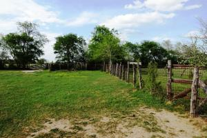 Lakes, Large Oaks, Fenced with Improved Pasture in Madison, TX (7 of 14)
