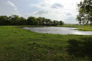 Lakes, Large Oaks, Fenced with Improved Pasture in Madison, TX (5 of 14)