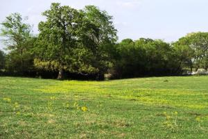 Lakes, Large Oaks, Fenced with Improved Pasture in Madison, TX (10 of 14)