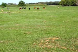 Lakes, Large Oaks, Fenced with Improved Pasture in Madison, TX (2 of 14)