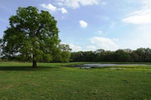 Lakes, Large Oaks, Fenced with Improved Pasture in Madison, TX (9 of 14)