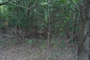 Lonoke County Recreational and Hunting Tract, 40 acres in Lonoke, AR (8 of 16)