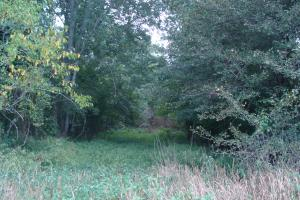Lonoke County Recreational and Hunting Tract, 40 acres in Lonoke, AR (6 of 16)