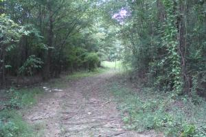 Lonoke County Recreational and Hunting Tract, 40 acres in Lonoke, AR (15 of 16)