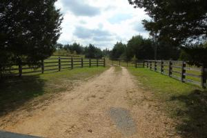 WILL DIVIDE!  The Davenport Recreational/Hunting  Farm - Crenshaw County AL
