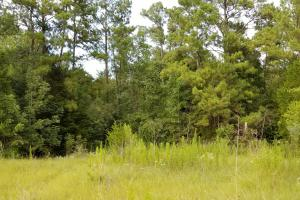 81 Acre Recreational/Timberland Tract in San Jacinto, TX (13 of 21)
