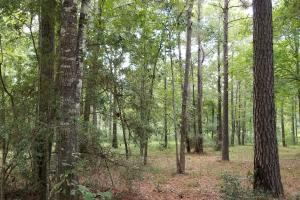 81 Acre Recreational/Timberland Tract in San Jacinto, TX (20 of 21)