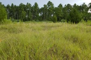 81 Acre Recreational/Timberland Tract in San Jacinto, TX (11 of 21)