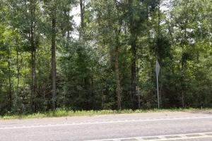81 Acre Recreational/Timberland Tract in San Jacinto, TX (9 of 21)